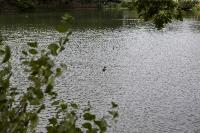 Туляки сообщают о массовой гибели уток в Платоновском парке, Фото: 4