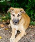 Собаки на тульской метеостанции, Фото: 10