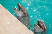 Дельфины, Фото: 17