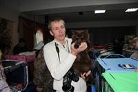 В Туле прошла международная выставка кошек, Фото: 46