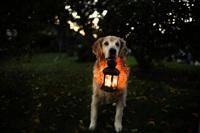 Самая счастливая собака в мире!, Фото: 4