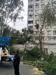 Читатель о вырубке деревьев на ул. Революции: «Была красивая зеленая улица, а теперь…», Фото: 7