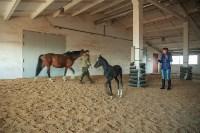 «Куликово поле» объявляет конкурс на лучшее имя для маленькой лошадки, Фото: 2