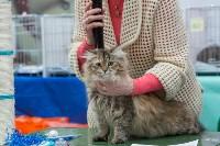 Выставка кошек в Туле, Фото: 23