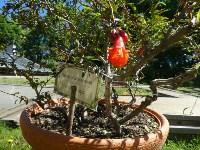 Травы и цветы Ясной Поляны, Фото: 9