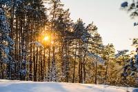 Снежное Поленово, Фото: 48