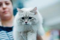 """Выставка """"Пряничные кошки"""" в ТРЦ """"Макси"""", Фото: 45"""