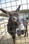 Зоопарк на набережной Упы в Туле, Фото: 6