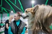 Выставка собак в Туле, Фото: 82