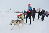 Праздник северных собак на Куликовом поле , Фото: 70