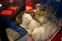 Пряничные кошки, Фото: 36