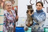 Выставка кошек в Туле, Фото: 84