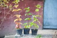 Тульская городская УК сажает деревья, Фото: 4