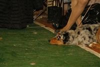В Туле прошла всероссийская выставка собак, Фото: 7