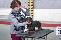 Выставка собак в Туле 26.01, Фото: 33