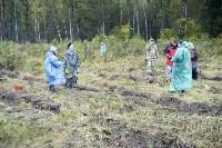 В Веневском районе высажено 24 тысячи сосен, Фото: 11