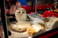 Пряничные кошки, Фото: 39