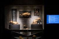 Один день в музее Археологии Тульского кремля, Фото: 26