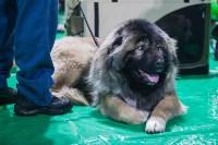 Выставка собак в Туле, Фото: 1