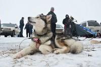 Праздник северных собак на Куликовом поле , Фото: 50
