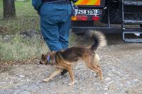 Испытания кинологов в Тульском спасательном центре, Фото: 7
