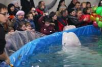 Дельфинарий в Туле, Фото: 15