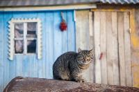Тульские котики, Фото: 46