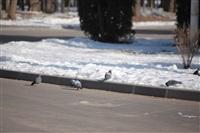 Улицы Тулы, 28 февраля 2014, Фото: 27