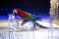 Шоу фонтанов «13 месяцев»: успей увидеть уникальную программу в Тульском цирке, Фото: 62