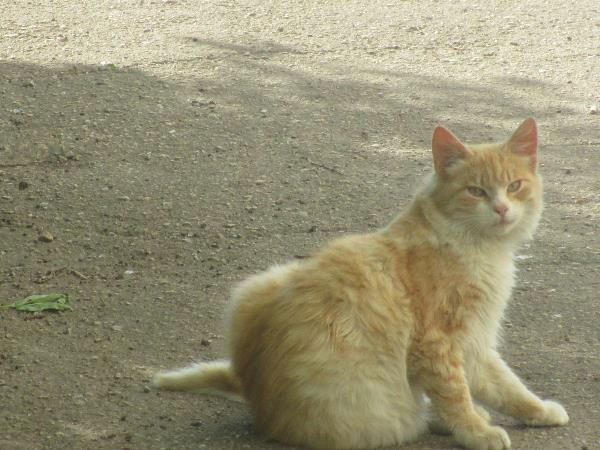 День рыжего кота