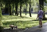 Рейд по выгулу собак в Центральном парке, Фото: 1