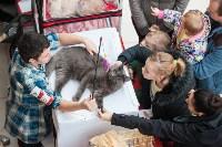 Выставка кошек в МАКСИ, Фото: 34