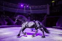 Туляков приглашают на новогоднее представление «Ёлка в цирке», Фото: 91
