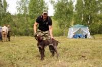 Выставка охотничьих собак под Тулой, Фото: 104