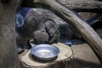 Тульский экзотариум: животные, Фото: 50