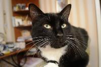 Тульские коты, которых достали хозяева на самоизоляции, Фото: 34