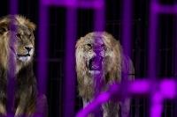 Шоу фонтанов «13 месяцев»: успей увидеть уникальную программу в Тульском цирке, Фото: 225