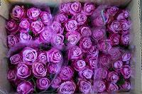 Миллион разных роз: как устроена цветочная теплица, Фото: 59