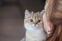В Туле прошла выставка «Пряничные кошки» , Фото: 22