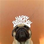 Фотогеничный пес Норм из Сиэтла, Фото: 10