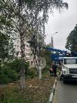 Читатель о вырубке деревьев на ул. Революции: «Была красивая зеленая улица, а теперь…», Фото: 9