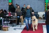 Выставка собак в Туле, Фото: 99
