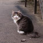 Тульские котики, Фото: 71