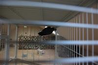 трогательный зоопарк, Фото: 13