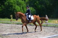 В Ясной поляне стартовал турнир по конному спорту, Фото: 106