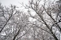 Снежная Тула. 15 ноября 2015, Фото: 62