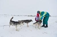 Праздник северных собак на Куликовом поле , Фото: 21