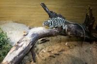 Тульский экзотариум: животные, Фото: 42