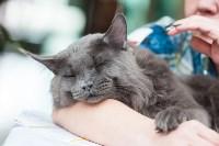 Выставка кошек в МАКСИ, Фото: 42
