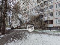 В Туле упавшее на девятиэтажку дерево повредило несколько балконов, Фото: 11